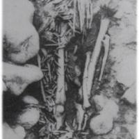 Olenij Ostrovin mesoliittinen kalmisto