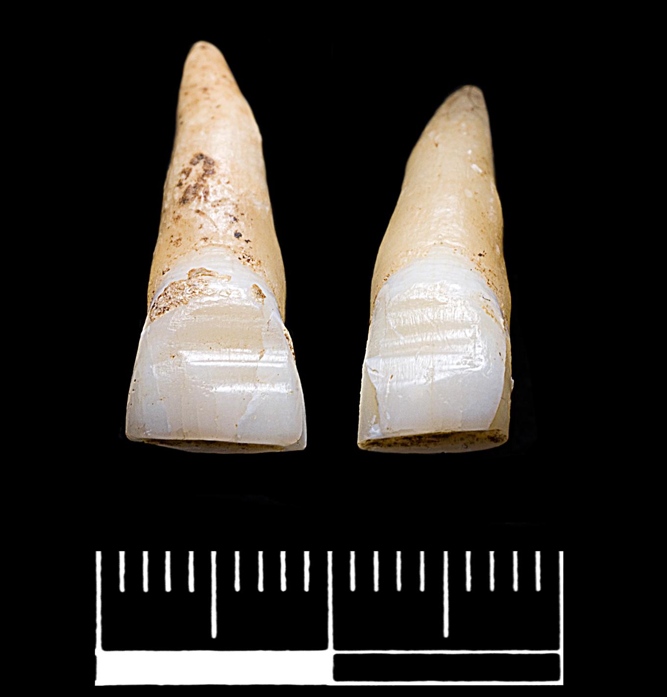 Kuva: Oxford Archaeology.