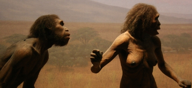 Homo erectus -rekonstruktioita. KNM-ER 1808:n luusto saattaa osoittaa, että altruismilla on miljoonien vuosien historia, sillä yksilö ei olisi voinut elää ilman huolenpitoa. Kuva: Sarah Pilliard/Flickr CC.