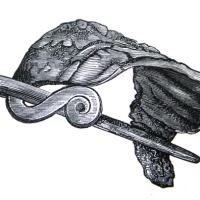 Hauta-antimena sankasolki – Kuka käytti rautaisia solkia nuoremmalla rautakaudella?
