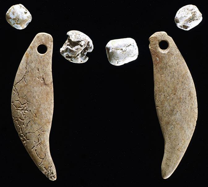 Nuori punailveksen pentu oli haudattu erilliseen hautakuoppaan. Eläimen kaulassa on ollut panta tai koru, jossa kuvan karhunhampaat ja simpukankuorihelmet ovat olleet kiinnitettyinä. Kuva: Kenneth Farnsworth