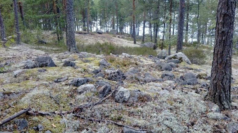 Yksi Jyväskylän Pyhäsaaren lapinraunioista. Lapinrauniot ovat sisämaan röykkiöitä, jotka yleensä ajoittuvat metallikaudelle. Kuva: Wikimedia Commons.