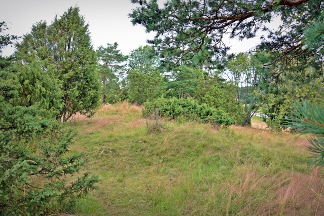 Untamalan Myllymäen kalmistoa. Kuvan keskellä voi erottaa matalan kummun. Kuva: U. Moilanen.