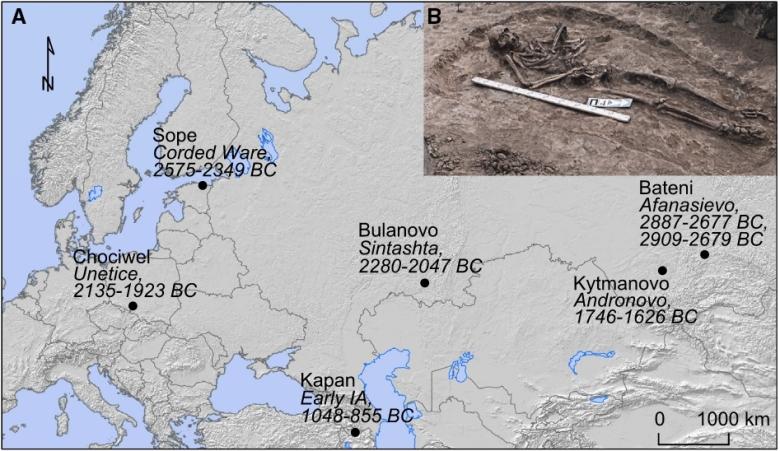Tutkimuksessa etsittiin taudinaiheuttajan muinais-DNA:ta yhteensä 101 yksilön hampaista Euroopassa ja Aasiassa. Sopivia näytteitä hankittiin niin kaivauksilta kuin museokokoelmista. Yhteensä seitsemän yksilön hampaasta löydettiin Yersinia pestis -bakteeria. Yksilöt ja ajoitukset on esitetty kuvassa. Yläkulman hautaus on Sintasha-kulttuuriin kuuluvalta Bulanovon kohteelta. Kuva: Rasmussen & Allentoft et al. 2015, fig. 1.