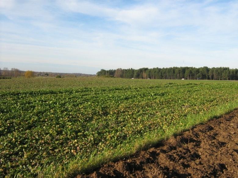 Koillis-Virossa sijaitseva Sopen kivikautinen kalmisto löytyi pellonmuokkauksen yhteydessä 1800-luvun lopulla. Paikalle on haudattu kymmenkunta vainajaa, joiden joukossa on uuden tutkimuksen mukaan ollut ruttoon kuollut yksilö. Kuva: Ingmar Noorlaid.