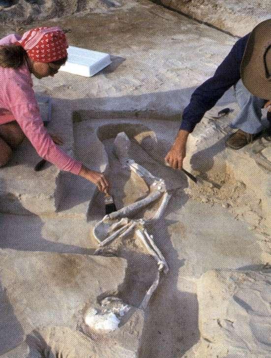 Mungon miehen hautaa tutkitaan vuonna 1974. Kuva: Australian Geographic.
