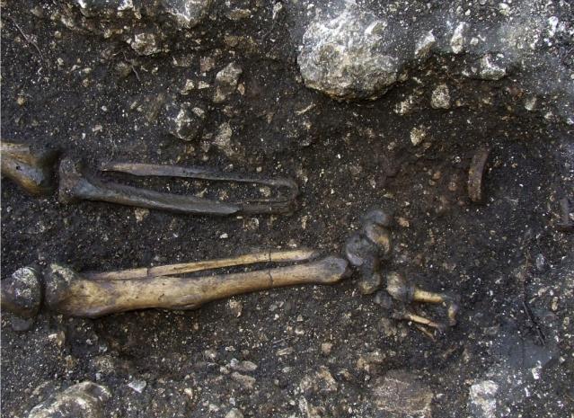 Amputoitu jalka ja proteesiin kuulunut rautarengas in situ. Kuva: OEAI (Itävallan arkeologinen instituutti).
