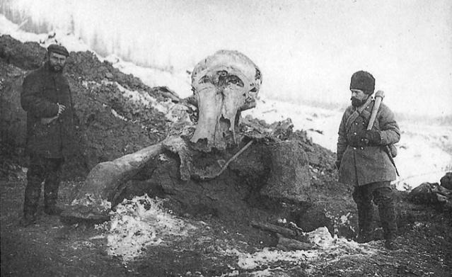 Otto Herz ja Eugen Pfizenmayer seisovat Beresovkan mammutin jäännöksillä vuonnna 1901.