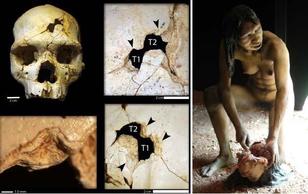 Vasemmalla: Sime de los Huesos -luolasta löydetyissä kalloissa on väkivallan merkkejä (Sala et al. 2015). Oikealla: Burgosin museon näyttelyyn on luotu kannibalismia harjoittava Homo antecessor -nainen (Ibeas Museum, Burgos, Espanja).