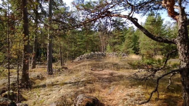 Höyterin röykkiöaluetta. Kiveysten rakentajilla on todennäköisesti ollut yhteyksiä Skandinaviaan, mihin sekä röykkiöhautaustapa, polttohautaus että esinelöytö viittaavat. Kuva: Kaisa Kyläkoski/Sukututkijan loppuvuosi.