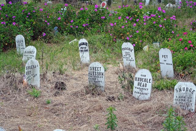San Franciscon Presidion lemmikkieläinten hautasmaalle on haudattu Presidion sotilastukikohdan henkilökunnan lemmikkejä. Kissojen ja koirien lisäksi joukossa on mm. lintuja, hamstereita ja iguana. Kuva: Niall Kennedy/Flickr CC.