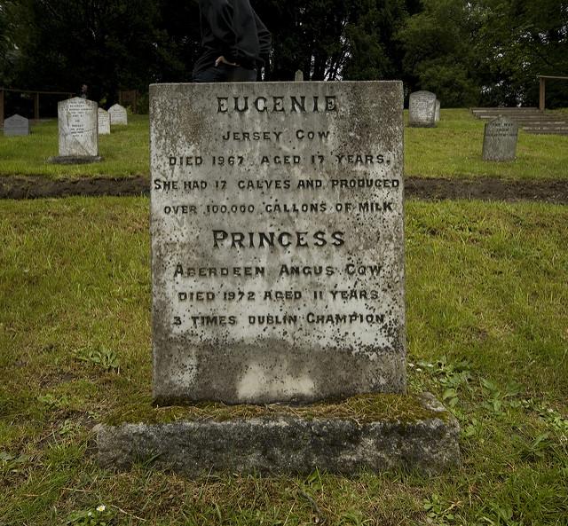 Irlannissa Powerscourt Estaten eläinten hautausmaalle on haudattu tilan eläimiä. Kuvassa kahden lehmän hautakivi. Kuva: William Murphy/Flickr CC.