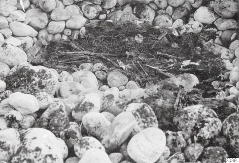 Kivihaudan kaivausta vuonna 1908 Finnmarkin Kjøøyalla. Kuva Oslon yliopiston anatomisen instituutin arkistoista. (Kringla, CC).