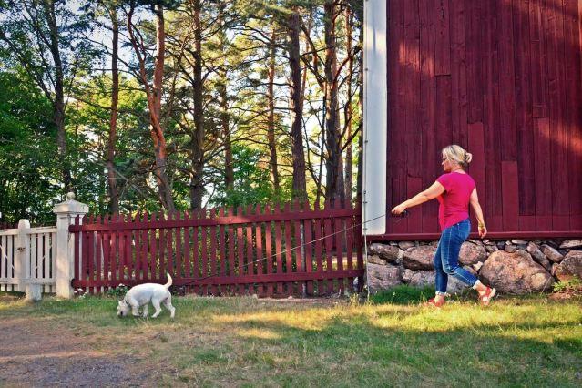Arkeologi Sanna Saunaluoma kouluttaa Hekla-koiraa havaitsemaan arkeologiset ihmisluut. Kuva: Ulla Moilanen.