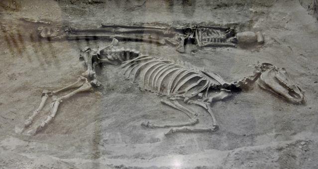 Liettuan kansallismuseossa on esillä kuva rautakautisesta hevosen ja ihmisen yhteishautauksesta. Kurilan projekti