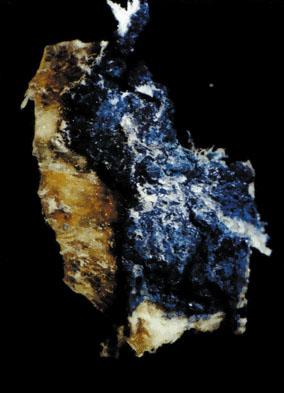 Vivianiittia jäämuumio Ötzin ihossa. Kuva: Tessardi 2000, fig. 1.