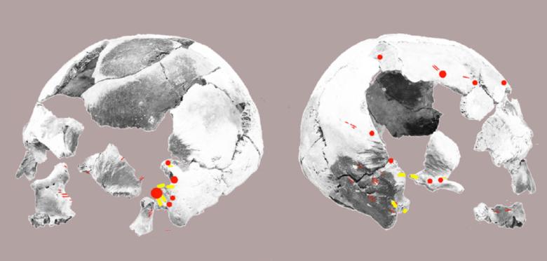 El Nidon polttohautauksen kallo. Kuvaan on merkitty mahdolliset viiltojäljet (punaiset viivat), raaputusjäljet (keltaiset alueet) ja hakkaus- tai painelujäljet (punaiset pisteet). (Lara et al. 2013)