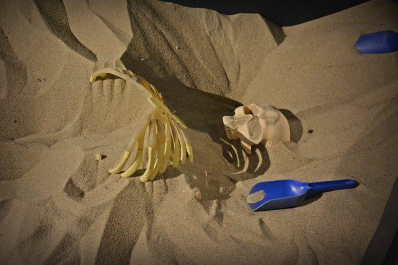 Näyttelyssä on lapsia ja lapsenmielisiä varten hiekkalaatikko, josta voi kaivaa esiin muoviluurangon. Kuva: Ulla Moilanen.