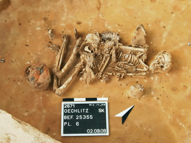 Nuorakeraaminen hauta, jossa antimina on astia sekä lukuisia eläimen hampaita ja simpukankuoria. Oechlitz, Saalekreis, Saksa. Kuva: D. Menke, LDA Sachsen-Anhalt.