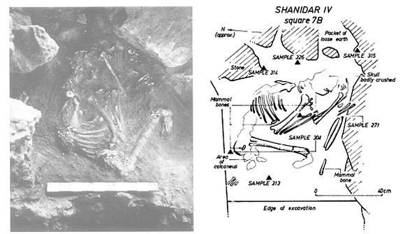 """Vuonna 1975 Science-lehdessä julkaistu kuva Shanidar IV -nimellä tunnetusta """"kukkahautauksesta""""."""