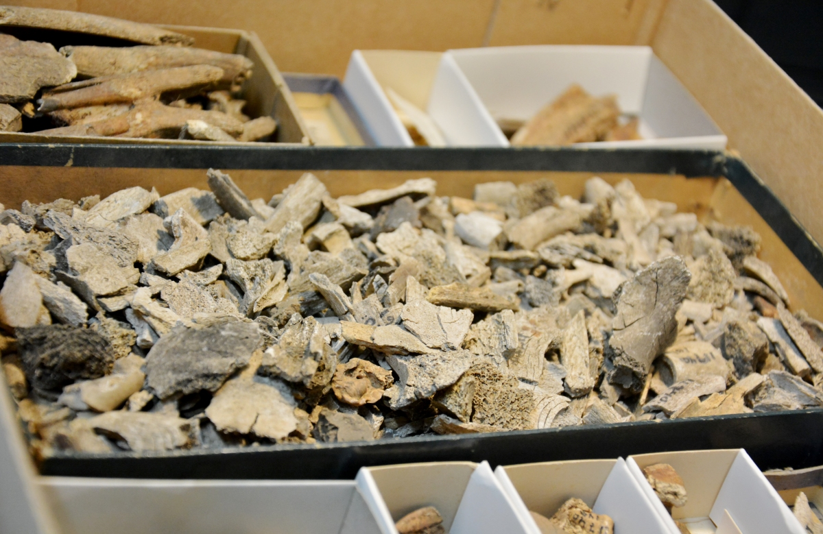Sastamalan Kaukolan rautakautta: Vertaileva arkistotutkimus röykkiöiden rakenteesta, löytöaineistosta ja ajoituksesta