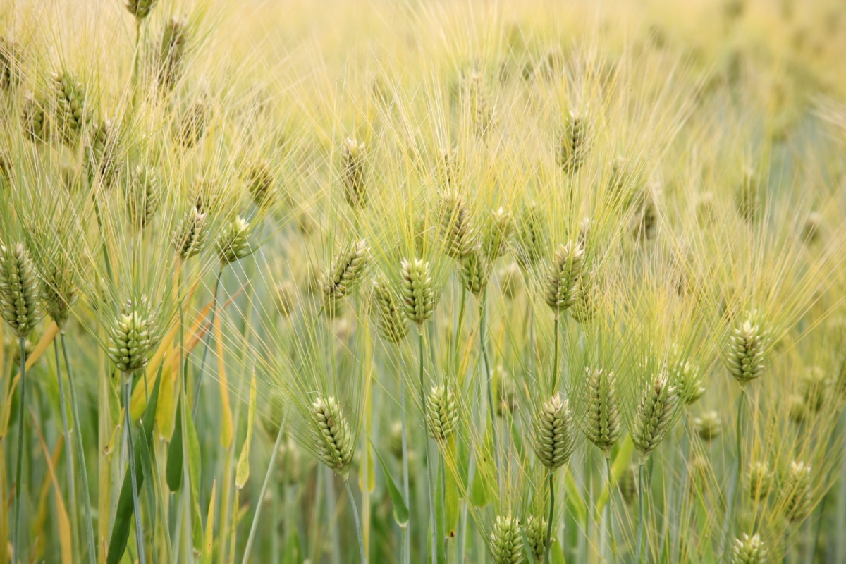 Maanviljelykulttuuriin siirtyminen näkyy luissa ja väestömäärissä