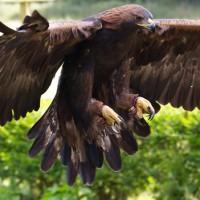 Kotka oli merkittävä lintu jo neandertalinihmisille